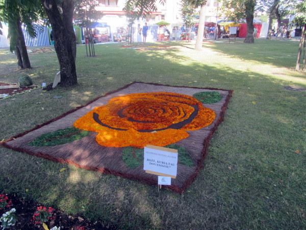 Ažuožerių kaimo kilimas – su milžiniška daugiažiede rože.