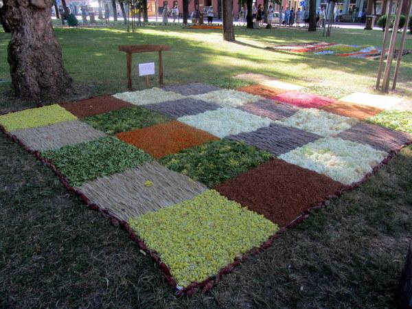 Kurklių miestelio bendruomenės kilimo gamtos turtų kvadratai.