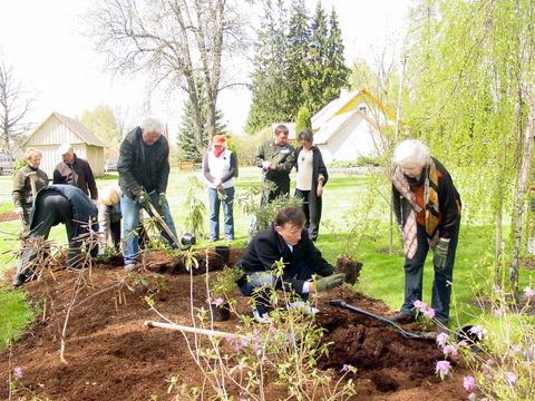 Rododendrynui papildyti Vilniaus anykštėnai dovanojo sodinukų.