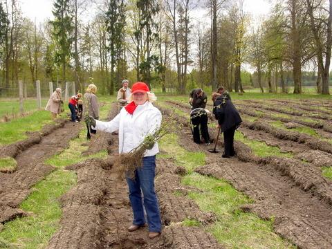 Vilniaus anykštėnai sodina skroblų giraitę.