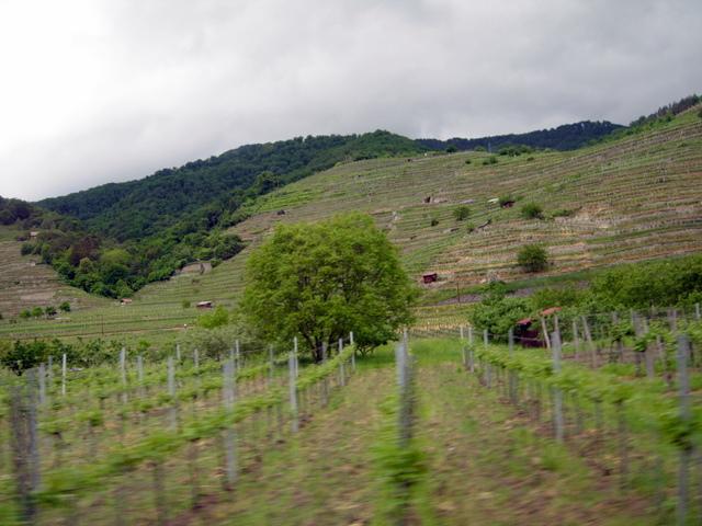 Vachau vynuogynų regionas